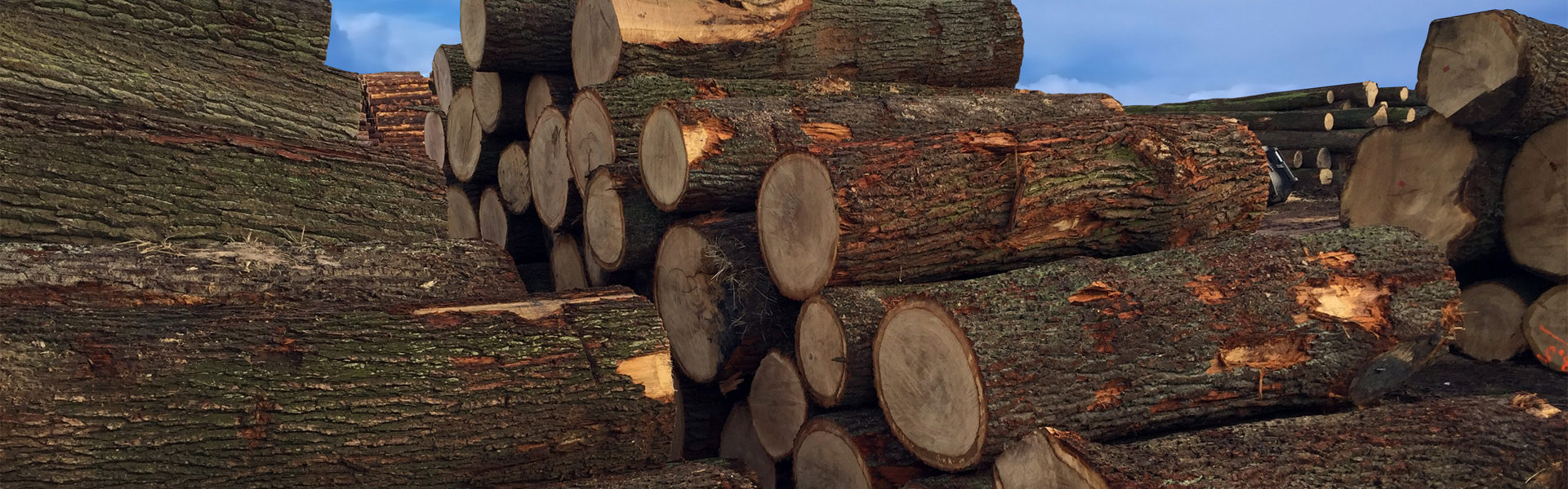 drewno okrąłe, logs