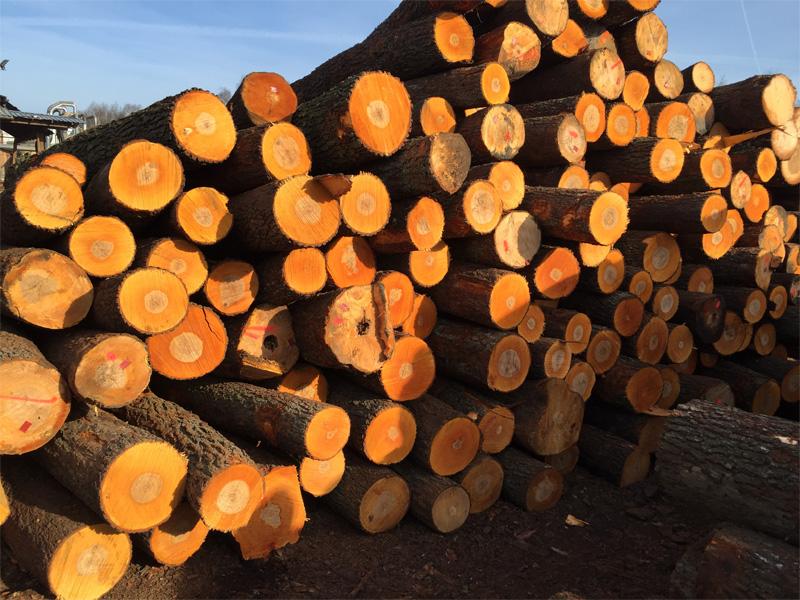 wood drewno logs drewno okrągłe woodinter